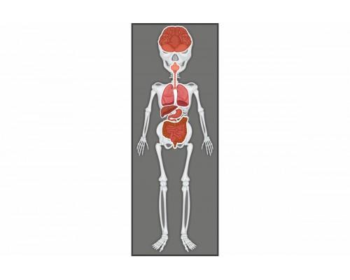 """Інтерактивний комплект стендів з біології """"Органи"""""""
